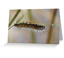 Hang in There Fuzzy Caterpillar 1 Greeting Card