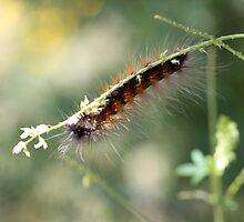 Hang in There Fuzzy Caterpillar 3 by ReidSmith