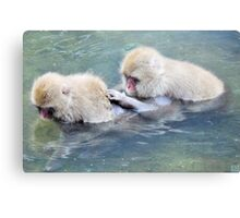 snow monkeys in hot spring Canvas Print