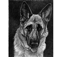 German Shepherd Dog Photographic Print