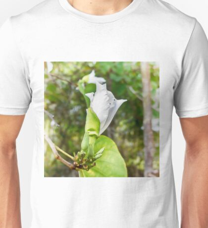 Unfolding beauty of a Butterfly tree flower Unisex T-Shirt