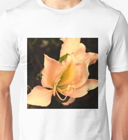 Bauhinia  with sunset glow Unisex T-Shirt