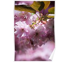 Pink Froth Poster