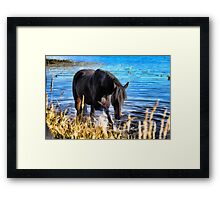 Percheron Thoroughbred Horse Artwork Framed Print