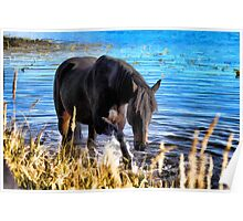 Percheron Thoroughbred Horse Artwork Poster
