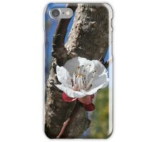A Single Apricot Blossom iPhone Case/Skin