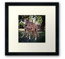 Dogs with game face on .26 Framed Print