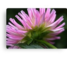 Dahlia Dreaming  Canvas Print