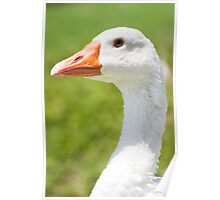 Goose Head Poster