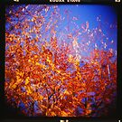 Fall Leaves by mewalsh
