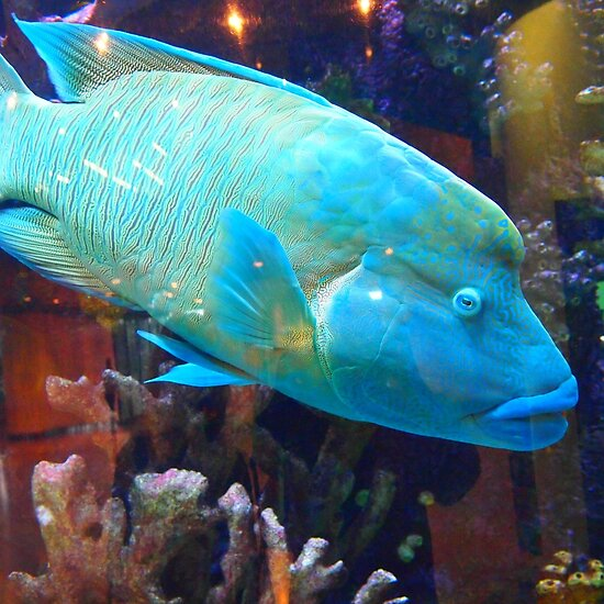 Fish swimming at the RCH Melbourne VIC Australia by Margaret Morgan (Watkins)