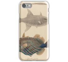 The zoology of Captain Beechey's voyage - Syngnathus perlatus + Balistes willughbeu + sesquilineatus iPhone Case/Skin