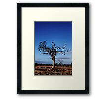 A Tree With Majestic Charm Framed Print