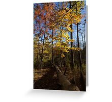 Of Fall and Fallen Giants - Autumn Forest in the Sunshine Greeting Card