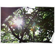 Sun's Rays Poster