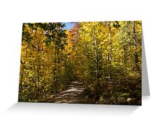 Sun Dappled Autumn Path - Enjoying a Sunny Forest Walk Greeting Card