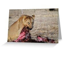 Lion, South Luangwa National Park, Zambia Greeting Card