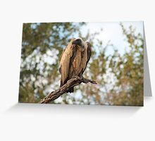 White-Backed Vulture, South Luangwa National Park, Zambia Greeting Card