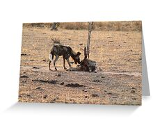 African Wild Dogs, South Luangwa National Park, Zambia Greeting Card
