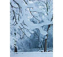 Frozen Winter Trees Photographic Print