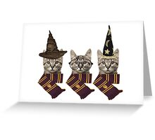 Potter cats Greeting Card