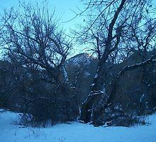 Frozen Rockies  by SoulTribePhoto