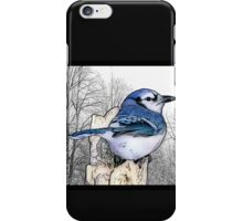Blue Jay Drawing iPhone Case/Skin