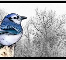 Blue Jay Drawing Sticker
