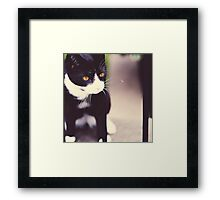 It's a Cat's Life Framed Print