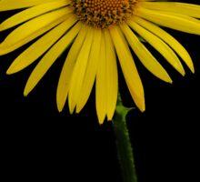 Yellow like the sun Sticker