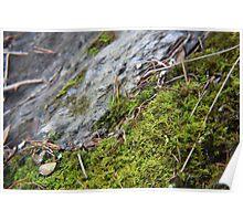 Macro Moss Poster