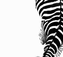 Zebra through the penumbra Sticker