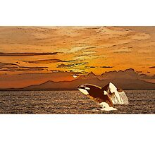 Sunset Whales Photographic Print