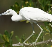 Immature Little Blue Heron Sticker