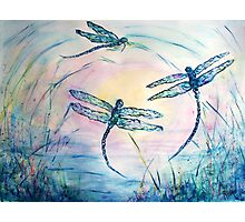 Dragonflies Photographic Print