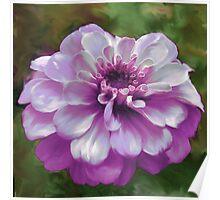 Beautiful Purple Zinnia Painting Poster