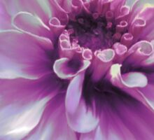 Beautiful Purple Zinnia Painting Sticker