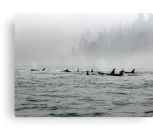 Passing Whales Canvas Print