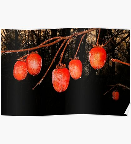 Persimmons at Sunrise Poster