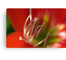 Red Hippy Canvas Print