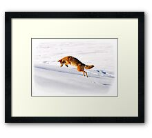 Renard Framed Print