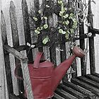 The old watering can by vigor