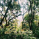 Jungle by ImogenMosher