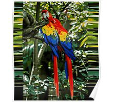 Pair of Parrots Poster