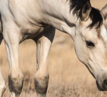 Pale Pinto Filly Sticker