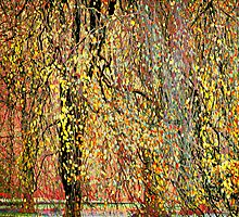 Weeping Trees #1a by Mark Ross
