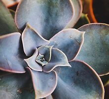 close up of succulent by Jessica  Lia