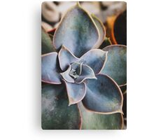 close up of succulent Canvas Print