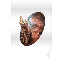 Dear Cat Poster