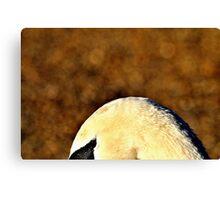 'Swans Eye' Canvas Print